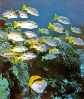 Queensland & Great Barier Reef